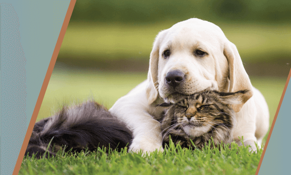 The Whole Nine Yards: How to Keep Your Pet Safe Outside