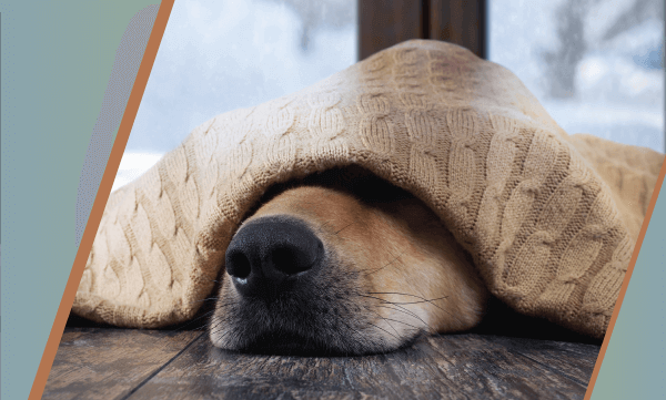 Bark, Bang, Boom! Keeping Your Pet Comfortable This Summer