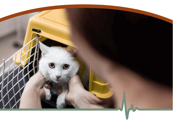 Cat being taken out of a kennel
